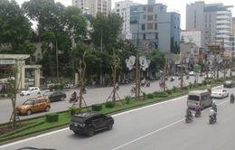Chọn cây gì cho dự án 1 triệu cây xanh ở Hà Nội?