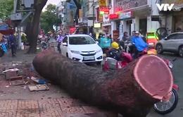 Mưa lớn, cây xanh bật gốc khiến 1 người bị thương