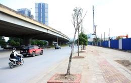 Hà Nội: Gần 90 cây xanh mới trồng chết khô trên phố