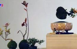 Độc đáo cây Bonsai biết… bay