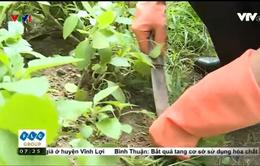 Cách cải tạo đất trồng và bón phân cho rau tại nhà