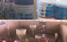 """Mua bán, sử dụng thuốc kháng sinh """"vô tội vạ"""" trong chăn nuôi"""