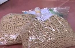 Chiêu mới sử dụng chất cấm trong chăn nuôi