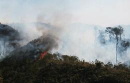 Kiểm soát đám cháy rừng tại vườn quốc gia Hoàng Liên