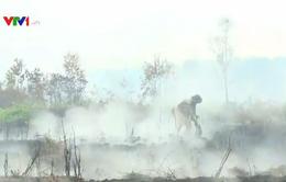 Tạm dừng chữa cháy tại vùng than bùn diện tích lớn ở Cà Mau