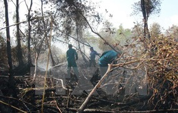Thông tin cháy lớn rừng tràm U Minh Hạ là không chính xác