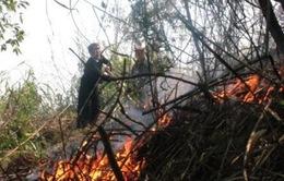 Nhiều diện tích rừng Cà Mau ở mức cảnh báo cháy cấp 4, 5