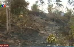 Cháy khu vực rừng trồng núi Hầm Vàng tại Đà Nẵng