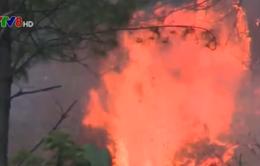Gia Lai: Cháy rừng trên đèo Mang Yang