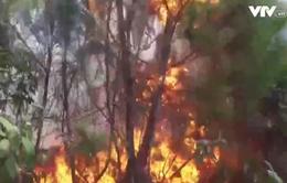Cháy rừng thông 40 năm tuổi ở Nghệ An