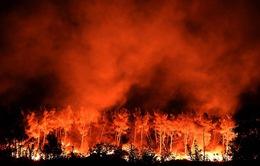 Nhiều nước châu Âu vật lộn với nạn cháy rừng
