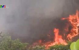 Đồng Tháp: 12 điểm rừng được cảnh báo nguy cơ cháy cấp V