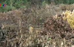 Nguy cơ cháy rừng tái diễn tại Nghệ An