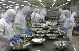 Nhiều nhà máy chế biến thủy sản ở Cà Mau thiếu tôm nguyên liệu