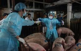 TP.HCM phát hiện thịt lợn dương tính với chất cấm