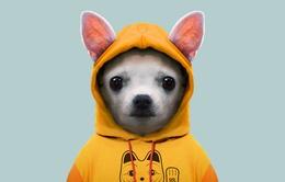 """Bộ ảnh siêu dễ thương về những con vật diện đồ đông """"chất"""" như người"""
