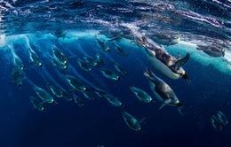 Thành lập khu bảo tồn biển lớn nhất thế giới tại Nam Cực
