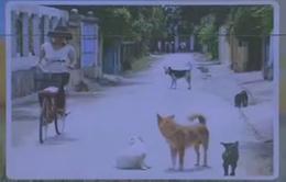 Số người bị chó dại cắn gia tăng tại Phú Yên
