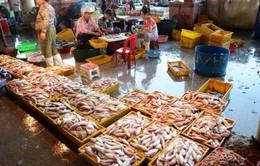 Hỗ trợ ngư dân miền Trung hơn 7 tỷ đồng sau vụ cá chết
