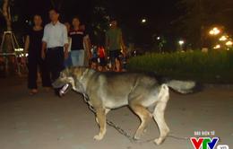 Khó ngăn ngừa bệnh chó dại ở nhiều vùng quê