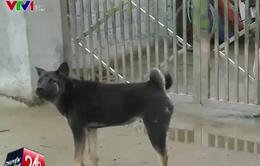 1.400 người tại Thái Nguyên nghi bị chó dại cắn