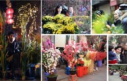 Nhộn nhịp không khí chợ hoa Tết Bính Thân 2016 tại Hà Nội