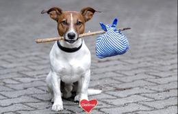 Chó, mèo là những động vật bị bỏ rơi nhiều nhất