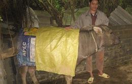 Hà Giang: Chủ động phòng chống đói rét cho đàn gia súc