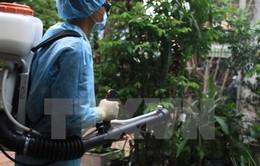 Nhiều điểm nóng chực chờ bùng phát dịch Zika tại TP.HCM