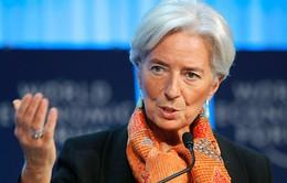 Tổng Giám đốc IMF hầu tòa do tắc trách