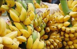 Nông dân ế đầy vườn, DN thiếu nguồn chuối xuất khẩu