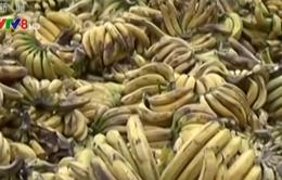 Trung Quốc hủy hơn 3.000 tấn chuối nhập khẩu từ Philippines