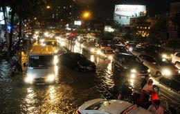 TP.HCM: Mưa lớn gây ngập lụt nghiêm trọng, cây xanh bật gốc đè vào ô tô