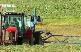 EU từ chối gia hạn sử dụng thuốc diệt cỏ chứa chất glyphosate