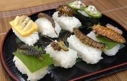 Cảnh báo nguy cơ ngộ độc chết người do ăn côn trùng