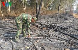 Khô hạn nặng, nguy cháy rừng cao tại ĐBSCL