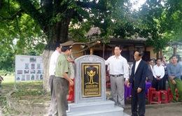 Quảng Nam gắn bia quần thể cây di sản Việt Nam