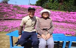 Cụ ông trồng hoa tím quanh nhà để người vợ mù thoát bệnh trầm cảm