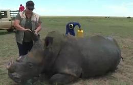 Chiến dịch cưa sừng để bảo vệ tê giác tại Nam Phi