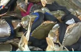 """Dây buộc cua biển - Chiêu thức tinh vi """"móc túi"""" người tiêu dùng"""