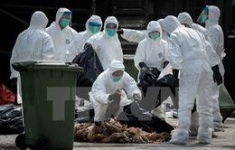 Dịch cúm gia cầm đe dọa ngành chăn nuôi tại châu Âu