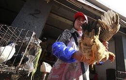 Thêm 1 người chết do nhiễm cúm gia cầm tại Trung Quốc