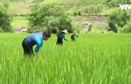 Thanh Hóa: Huyện nghèo không còn phải xin gạo cứu đói