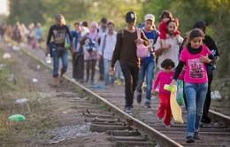 """Hy Lạp """"bật đèn xanh"""" cho dự luật đưa người di cư trở lại Thổ Nhĩ Kỳ"""