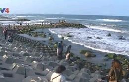 Đẹp mê hồn bãi đá rêu xanh làng biển Phú Yên