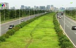 Dừng chi tiền, cỏ mọc um tùm trên các tuyến phố Thủ đô