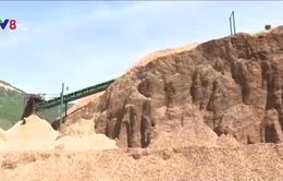 Xuất khẩu dăm gỗ giảm mạnh, doanh nghiệp gặp khó