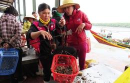 Người dân miền Trung lúng túng vì danh mục hải sản an toàn và không an toàn