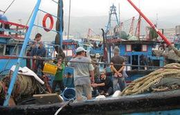 Thừa Thiên-Huế triển khai hỗ trợ ngư dân khắc phục khó khăn