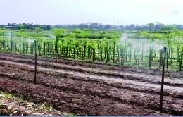 Đại biểu Quốc hội đồng tình mở rộng đối tượng được miễn thuế sử dụng đất nông nghiệp
